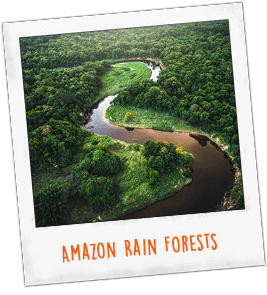 Amazon Rain Forests Brazil