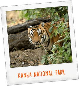 Kanha National Park India