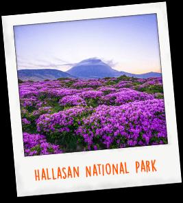 Hallasan National Park South Korea
